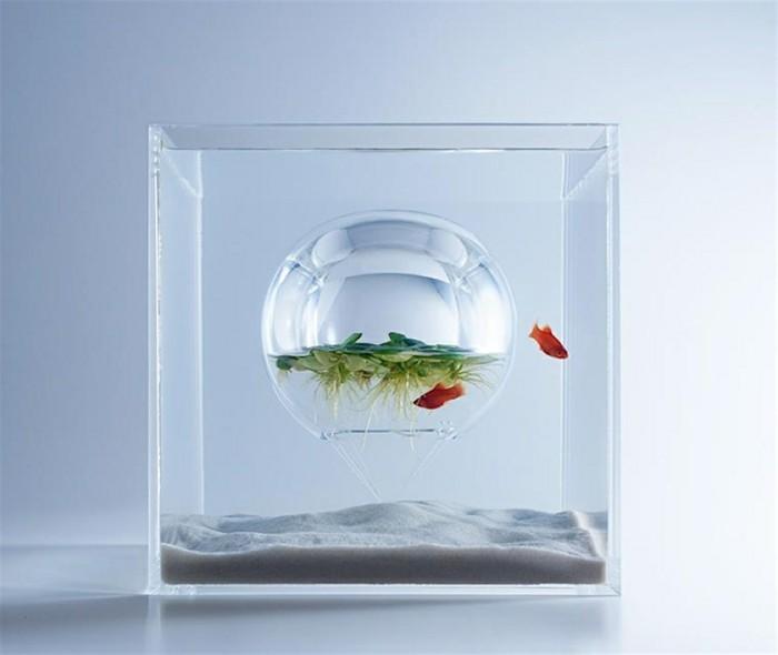 aquarium-schenken-das-schöne-konzept-von-haruka
