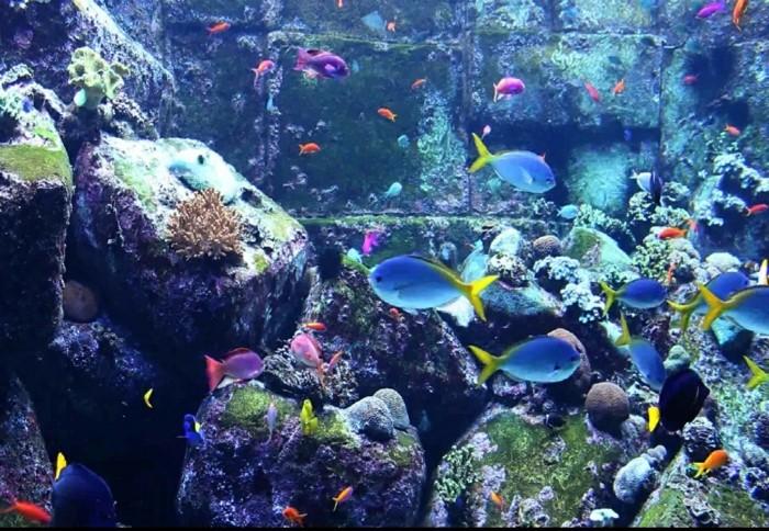 aquarium-schenken-die-aquarien-können-sehr-schön-aussehen
