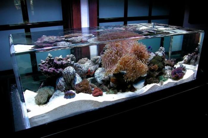 1001 ideen f r aquarium schenken finden sie das beste. Black Bedroom Furniture Sets. Home Design Ideas