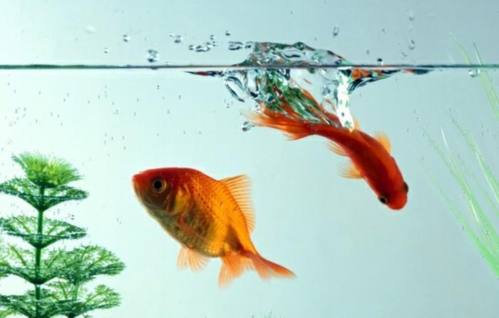 aquarium-schenken-die-aquaristik-ist-ein-sehr-schönes-hobby