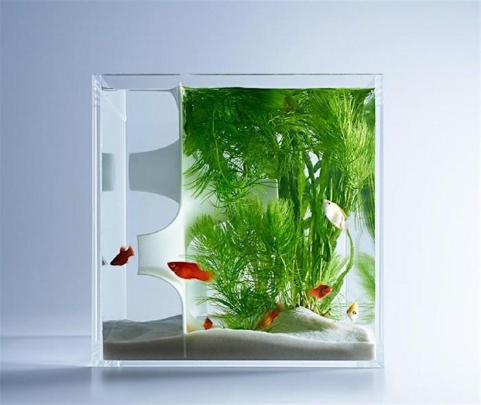 aquarium-schenken-die-ausgefallenen-aquarien-von-misawa