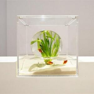 """Aquarium schenken - das """"Waterscape"""" Konzept"""