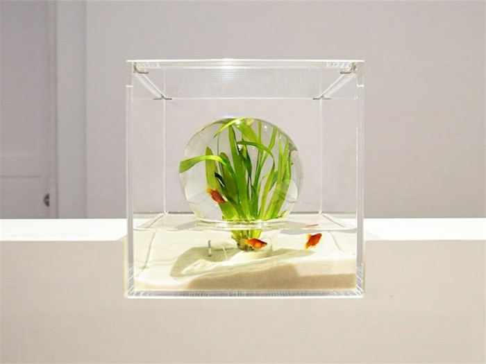 aquarium-schenken-die-prototypen-von-misawa