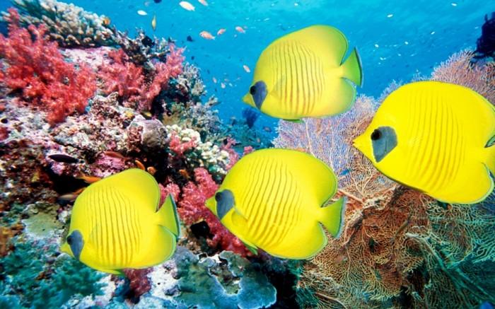 aquarium-schenken-die-schönheit-der-fische-in-einem-aquarium