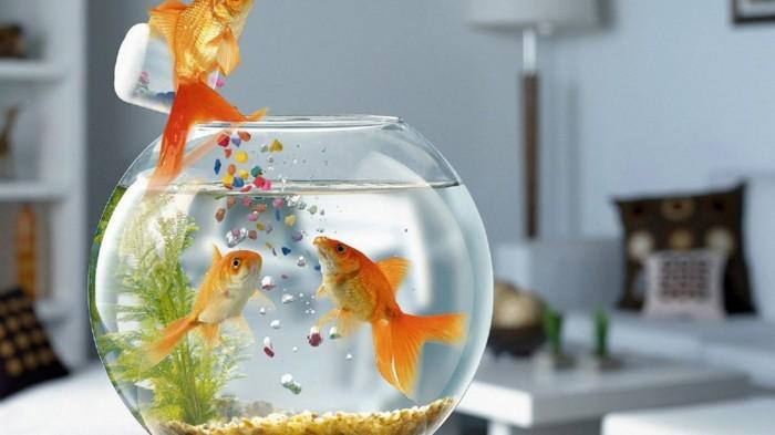 aquarium-schenken-die-schönen-aquarium-fische