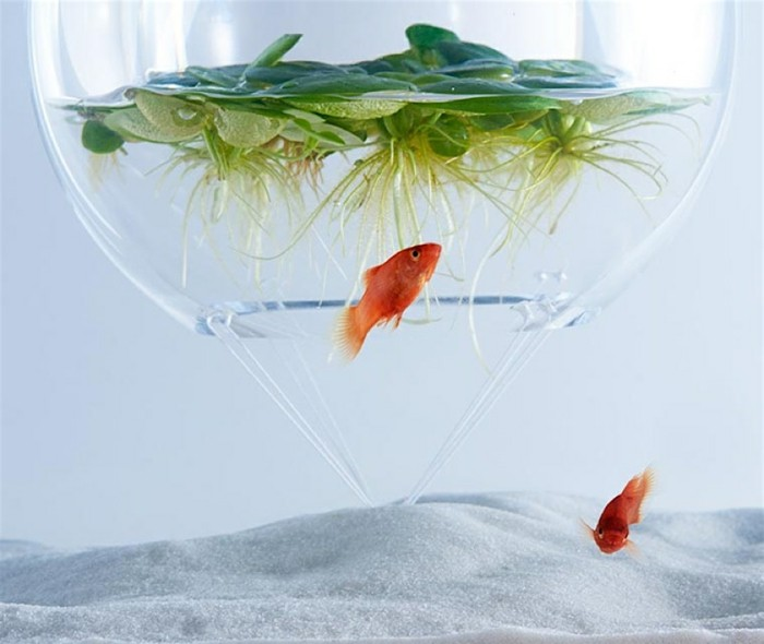 aquarium-schenken-die-schönen-glasbehälter-von-haruka