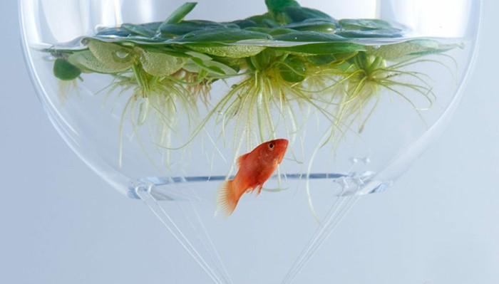 aquarium-schenken-die-schönheit-der-waterscapes