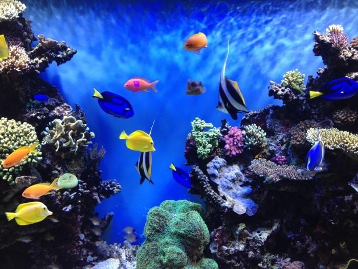 aquarium-schenken- die-schönheit-des-aquariums