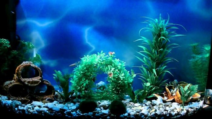 aquarium-schenken-die-schönheit-eines-aquariums