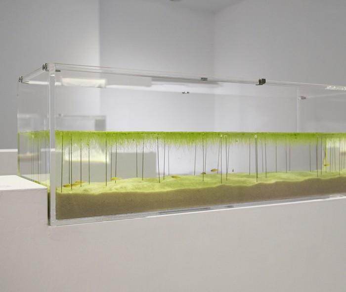 aquarium-schenken-die-von-haruka-ausgearbeiteten-aquarien
