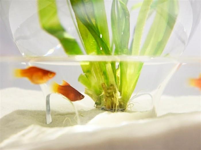 aquarium-schenken-die-waterscapes-prototypen