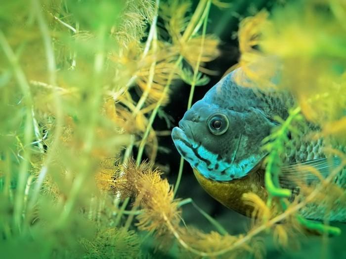 aquarium-schenken-ein-aquarium-fisch