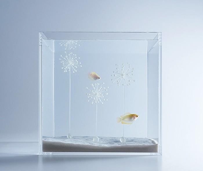 aquarium-schenken-eines-der-misawas-aquarien