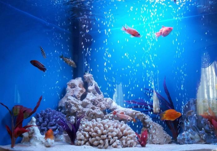 aquarium-schenken-es-gibt-viele-aquarianer