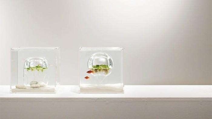 aquarium-schenken-harukas-schöne-prototypen