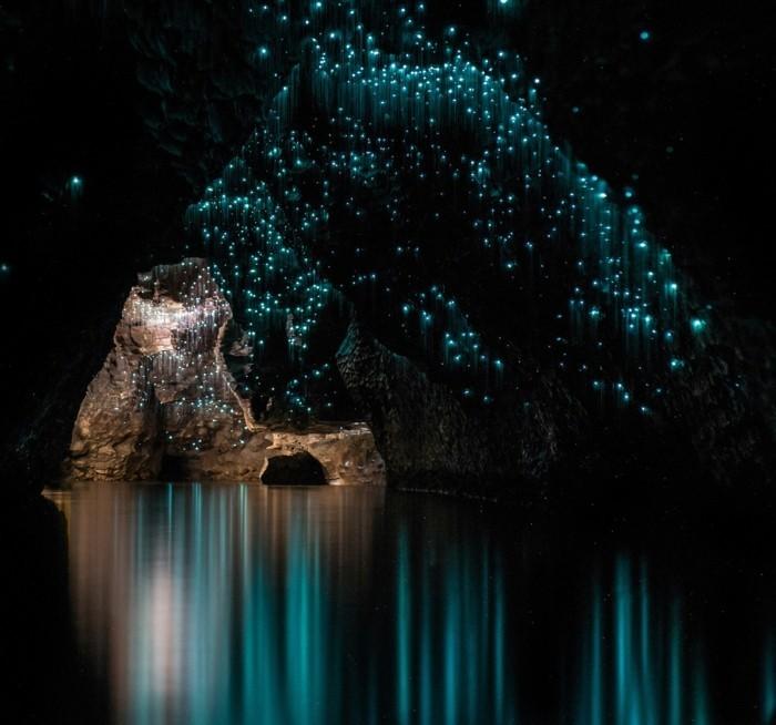 blaue-wunder-blickende-leuchtkäfer