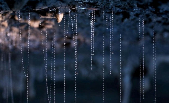 blaue-wunder-ruakuris-glühwürmchen