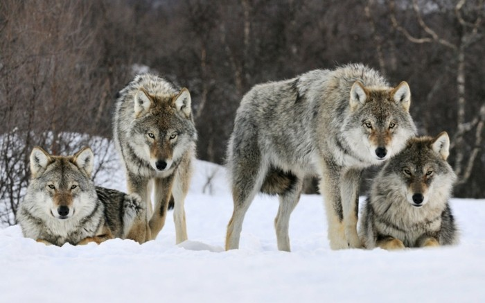 der-berg-ruft-wölfe-in-dem-zentralbalkan