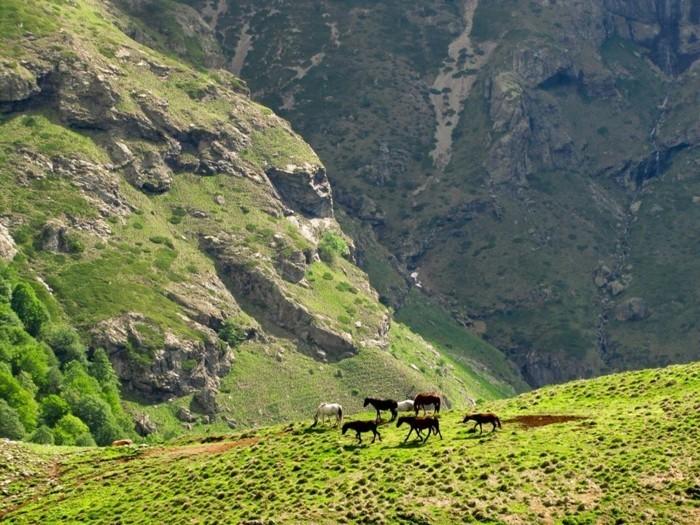 der-berg-ruft-wilde-pferdeherde-in-dem-balkan