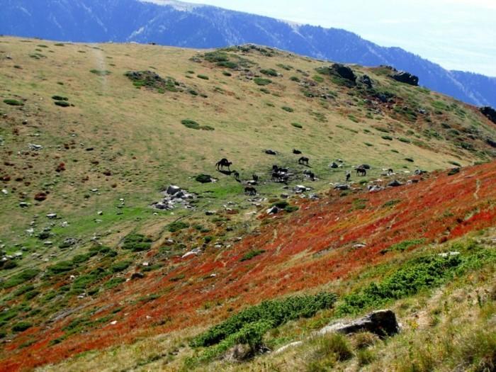 der-berg-ruft-wilde-pferdeherde-in-dem-nationalpark