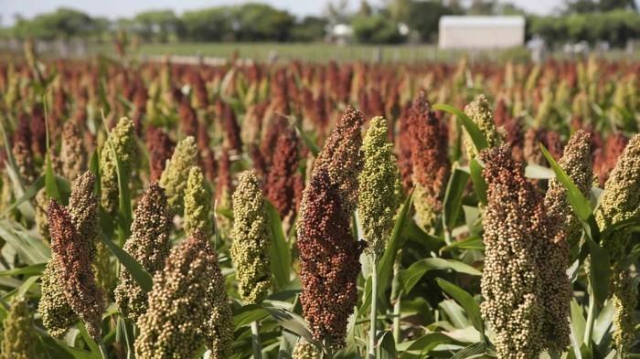 drohne-ausgangsstoffe-für-die-biokraftstoffherstellung