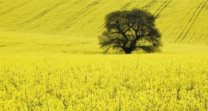 drohne-das-rapsöl-ist-einer-der-ausgansstoffe-für-die-biokraftstoffherstellung