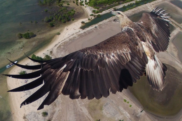 drohne-die-vogelperspektive-der-drohne