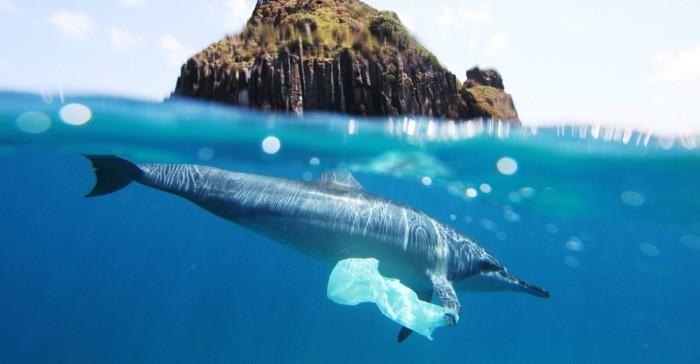 plastik-recycling-plastikmüll-in-den-ozeanen