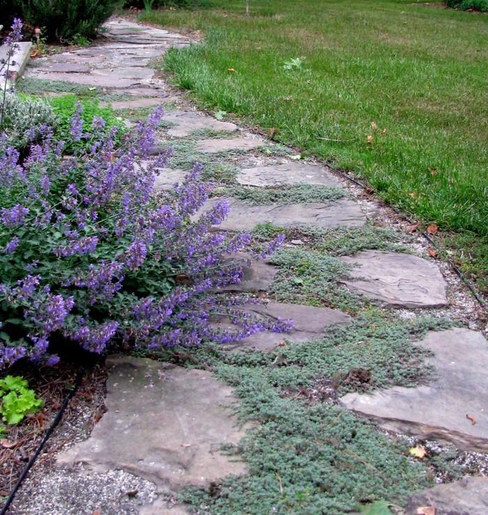 Gartenwege-gestalten-Ein-cooles-Exterieur