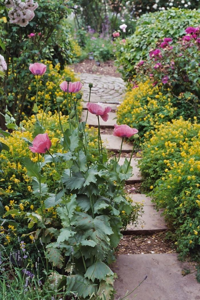 Gartenwege-gestalten-Eine-auffällige-Ausstattung