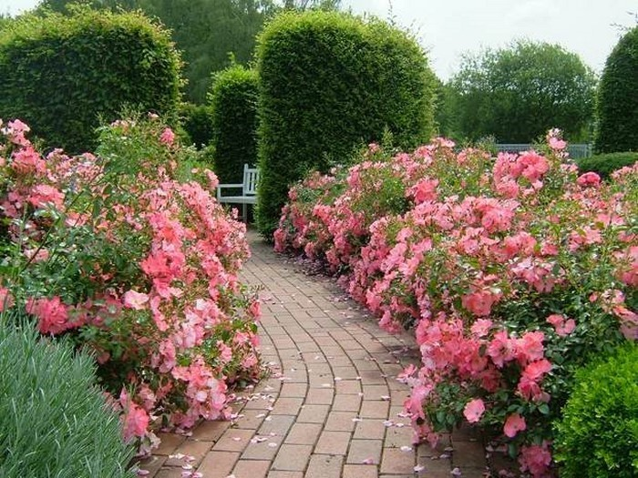 Gartenwege-gestalten-Eine-coole-Ausstrahlung