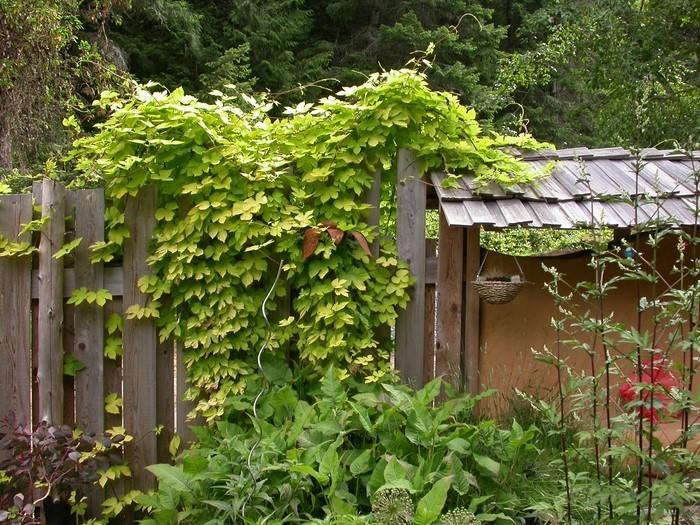 Gartenzaun-Sichtschutz-Ein-modernes-Interieur