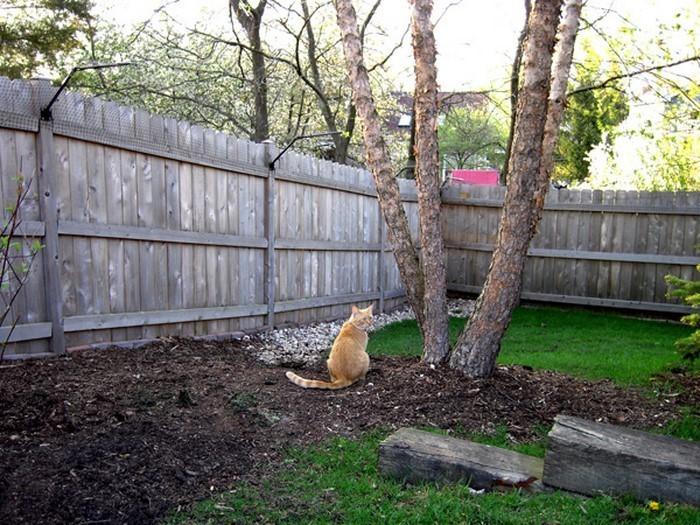Gartenzaun-Sichtschutz-Ein-wunderschönes-Interieur