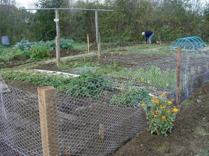 Gartenzaun-Sichtschutz-Eine-auffällige-Dekoration