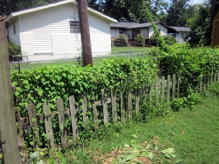 Gartenzaun-Sichtschutz-Eine-kreative-Atmosphäre