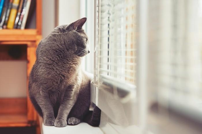 schöne katze - allein zu hause gelassen