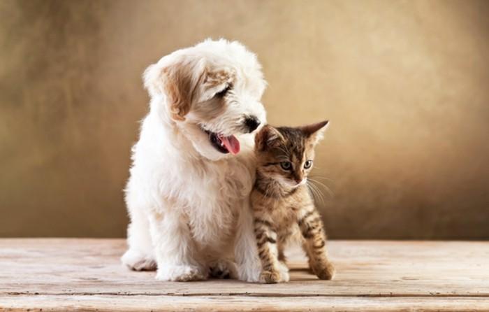 katze-und-hund-leben-zusammen
