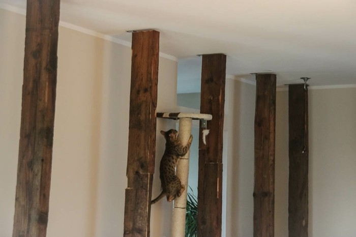 kratzbaum selbst bauen gallery of der fertige kratzbaum. Black Bedroom Furniture Sets. Home Design Ideas