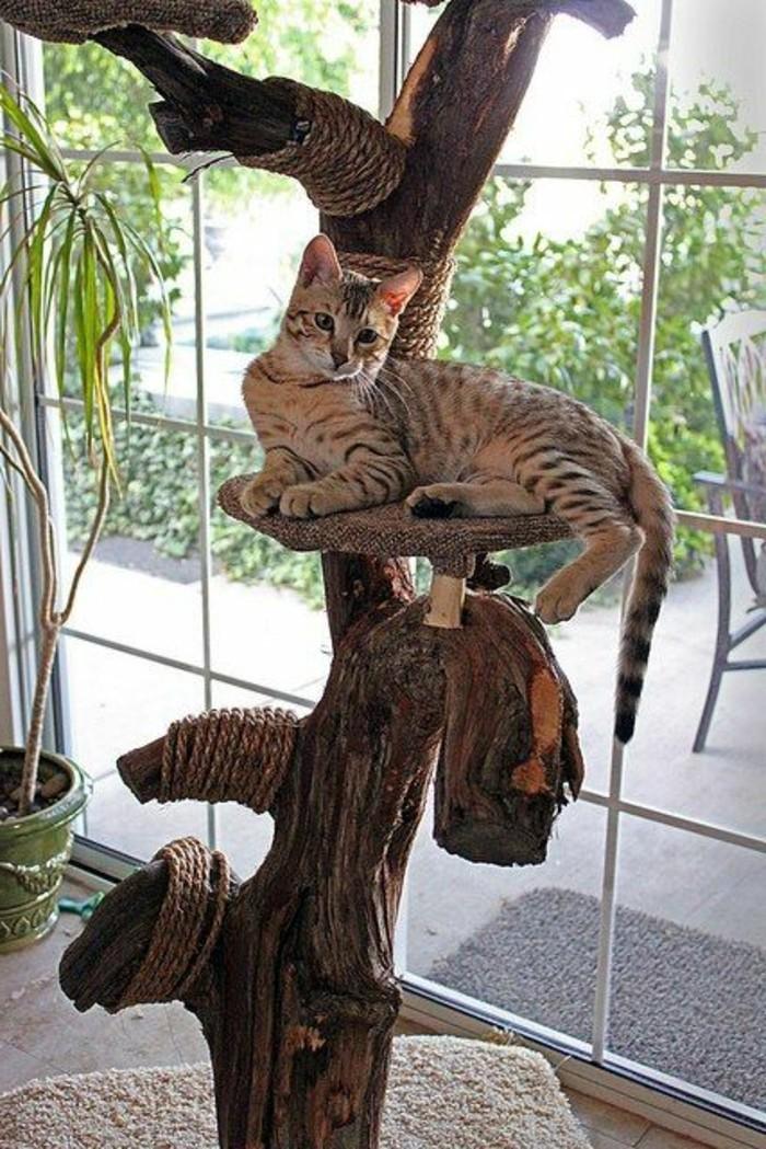 kratzbaum-selber-bauen-man-kann-aus-naturmaterialien-einen-kratzbaum ...