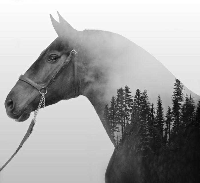 schöne-pferde-bilder-Mit-Mehrfachbelichtung-stimmungsvolle-Foto-kreieren