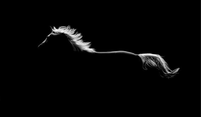 schöne-pferde-bilder-der-geist-des-wilden-pferdes