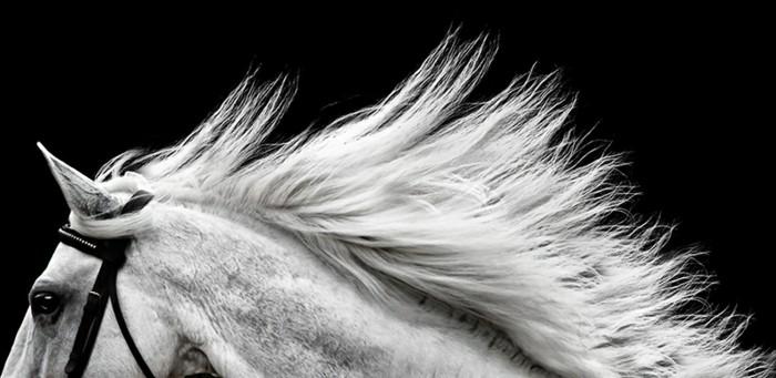 schöne-pferde-bilder-der-wilde-geist-der-freiheit