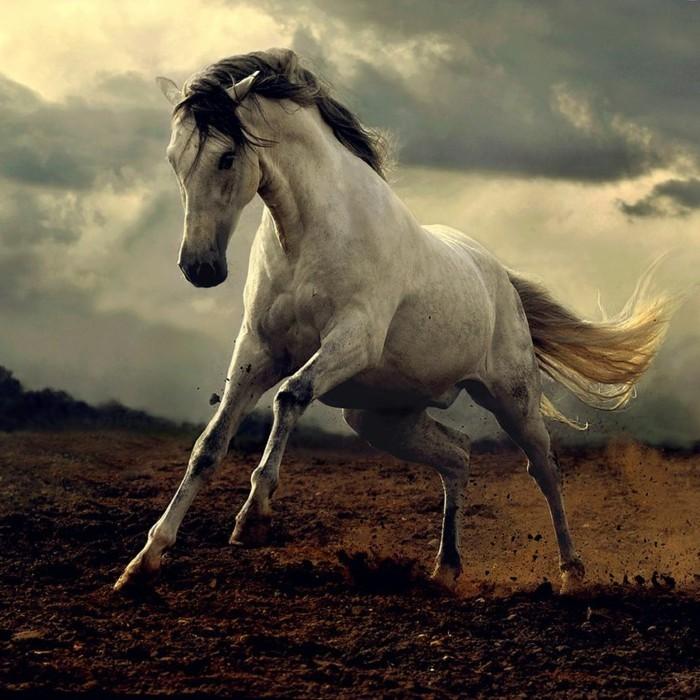 sch ne pferde bilder die die gro artigkeit der pferde zeigen. Black Bedroom Furniture Sets. Home Design Ideas