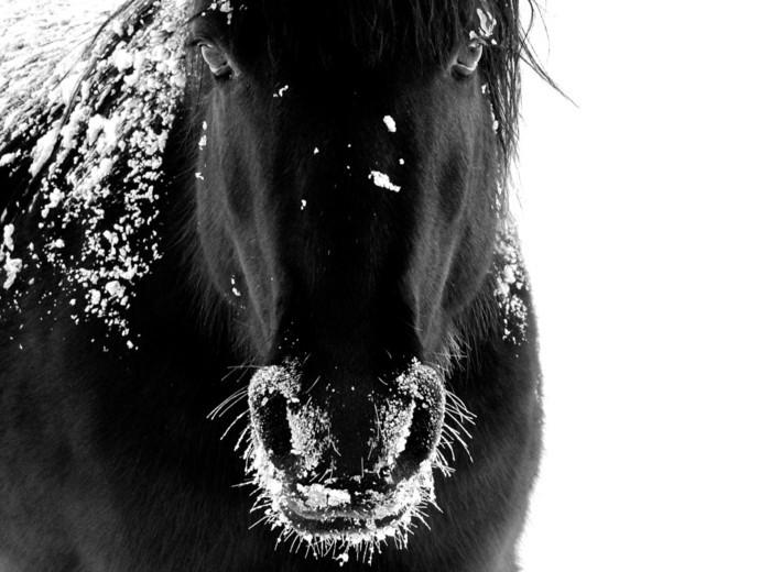 schöne-pferde-bilder-der-wilde-geist-des-pferdes