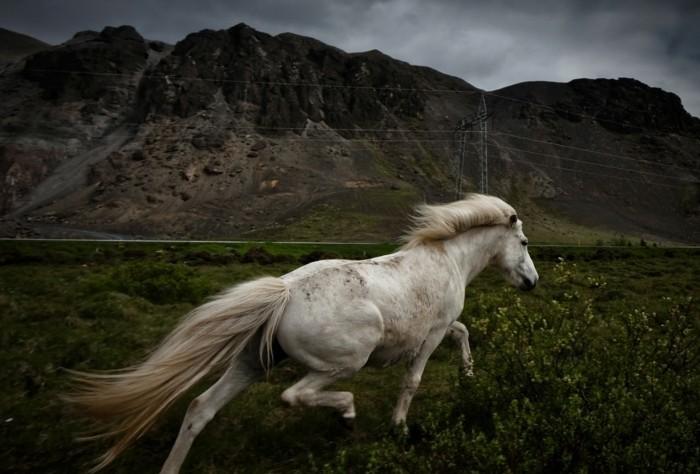 schöne-pferde-bilder-die-bezaubernde-schönheit-der-pferde