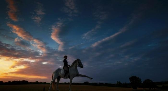 schöne-pferde-bilder-die-beziehung-zwischen-dem-menschen-und-dem-pferd