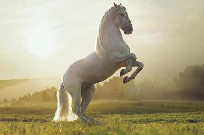 schöne-pferde-bilder-die-faszinierende-Schönheit-des-pferdes