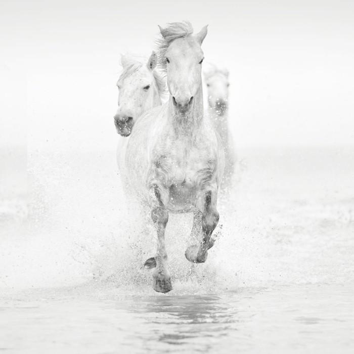schöne-pferde-bilder-die-pferde-sind-majestätische-tiere