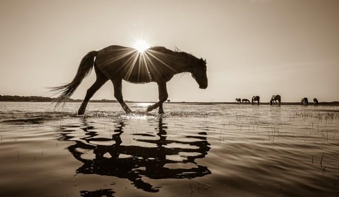 schöne-pferde-bilder-die-schönheit-der-freiheit