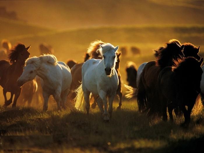 schöne-pferde-bilder-die-schönheit-der-wilden-pferde